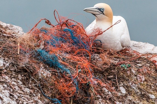 plastic pollution kills sea birds and other mammals